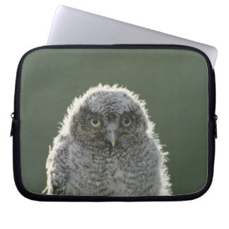 Eastern Screech-Owl, Megascops asio, Otus 3 Computer Sleeve