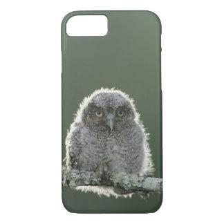 Eastern Screech-Owl, Megascops asio, Otus 3 iPhone 8/7 Case