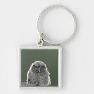 Eastern Screech-Owl, Megascops asio, Otus 3 Keychain