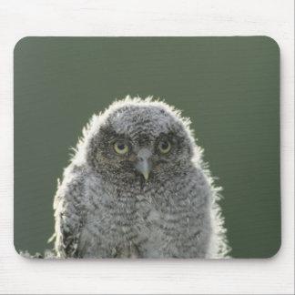 Eastern Screech-Owl, Megascops asio, Otus 3 Mouse Pad