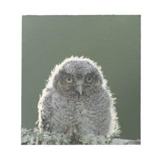 Eastern Screech-Owl, Megascops asio, Otus 3 Notepad