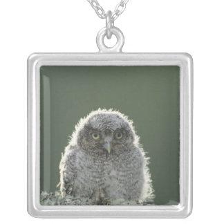 Eastern Screech-Owl, Megascops asio, Otus 3 Silver Plated Necklace