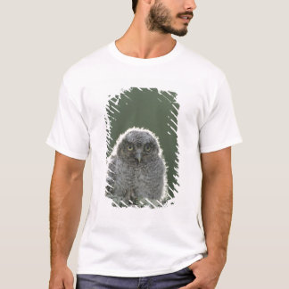 Eastern Screech-Owl, Megascops asio, Otus 3 T-Shirt