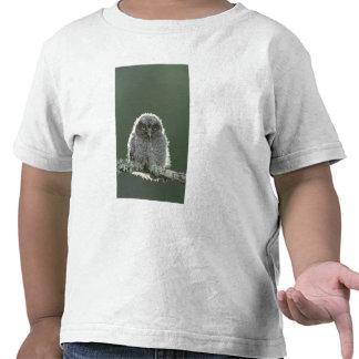 Eastern Screech-Owl, Megascops asio, Otus 3 T Shirt