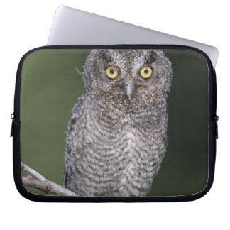 Eastern Screech-Owl, Megascops asio, Otus Laptop Sleeve
