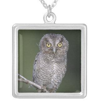 Eastern Screech-Owl, Megascops asio, Otus Square Pendant Necklace
