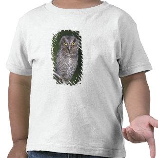 Eastern Screech-Owl, Megascops asio, Otus Shirts