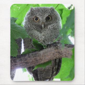Eastern Screech Owl Mouse Pad