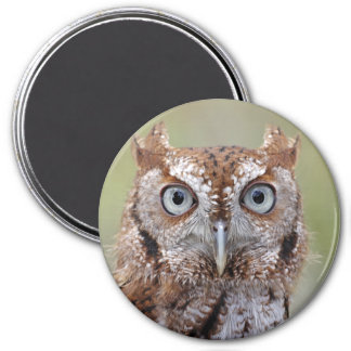 Eastern Screech Owl Photograph 3 Inch Round Magnet