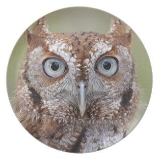 Eastern Screech Owl Photograph Dinner Plate