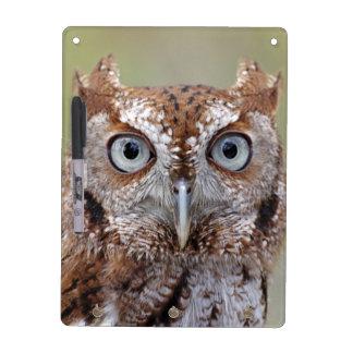 Eastern Screech Owl Photograph Dry-Erase Board