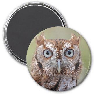 Eastern Screech Owl Photograph Magnet