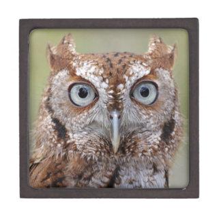 Eastern Screech Owl Photograph Premium Gift Box