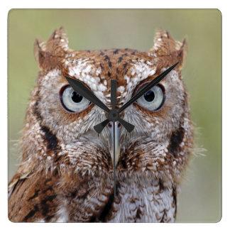 Eastern Screech Owl Photograph Square Wall Clock