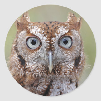 Eastern Screech Owl Photograph Stickers