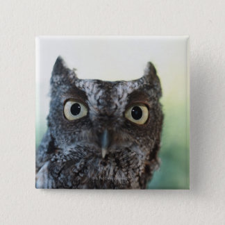 Eastern Screech Owl Portrait Showing Large Eyes Button