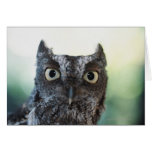 Eastern Screech Owl Portrait Showing Large Eyes Greeting Cards