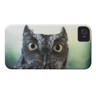 Eastern Screech Owl Portrait Showing Large Eyes Case-Mate iPhone 4 Case