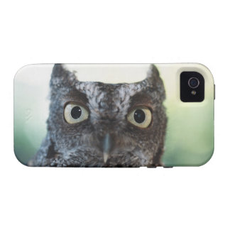Eastern Screech Owl Portrait Showing Large Eyes iPhone 4/4S Cover