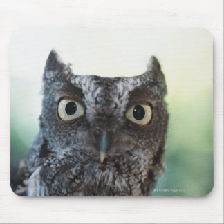 Eastern Screech Owl Portrait Showing Large Eyes Mouse Pad