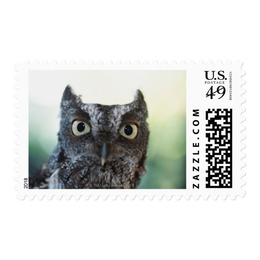 Eastern Screech Owl Portrait Showing Large Eyes Postage Stamps