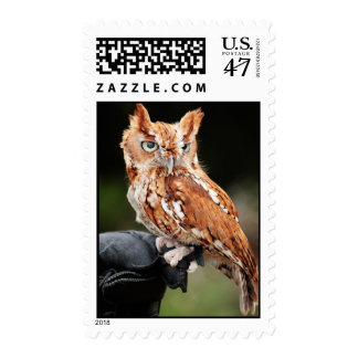 Eastern Screech Owl (Red-phase) postage