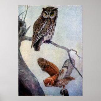 Eastern Screech Owls Poster