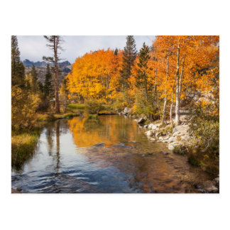 Eastern Sierra, Bishop Creek, California Outlet Postcard