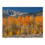 Eastern Sierra Fall Colors Postcard