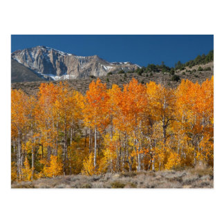 Eastern Sierra Fall Colors Postcard