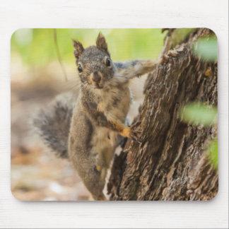Eastern Sierra Nevada Mouse Pad