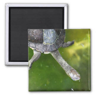 Eastern Snake-Necked Turtle 2 Inch Square Magnet