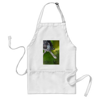 Eastern Snake-Necked Turtle Adult Apron