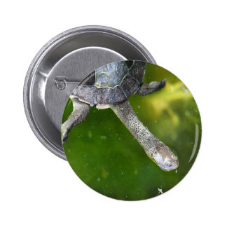 Eastern Snake-Necked Turtle Button