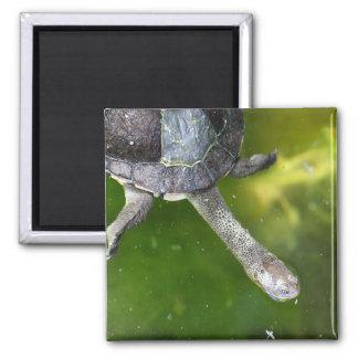 Eastern Snake-Necked Turtle Magnet
