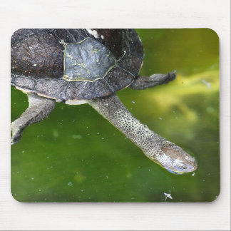 Eastern Snake-Necked Turtle Mouse Mat