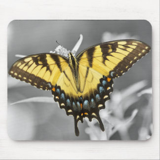 Eastern Swallowtail Butterfly Mouse Pad