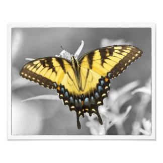 Eastern Swallowtail Pop Photo Print