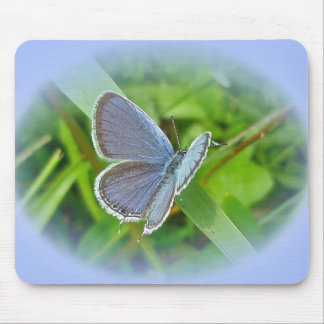 Eastern Tailed Blue Butterfly Coordinating Items Mouse Pad