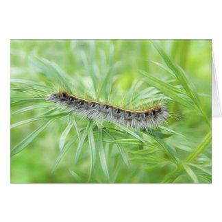 Eastern Tent Caterpillar Card