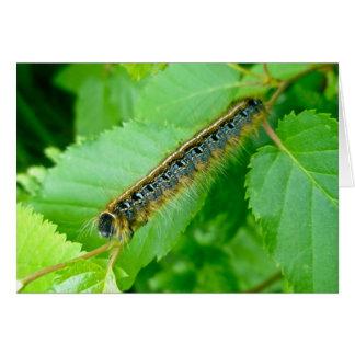 Eastern Tent Caterpillar Note Card