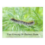 Eastern Tent Caterpillar Post Cards