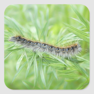 Eastern Tent Caterpillar Square Sticker