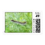 Eastern Tent Caterpillar Stamp