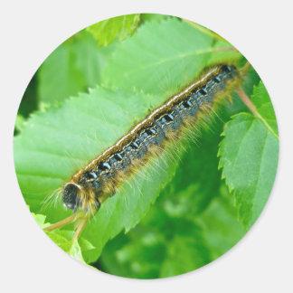 Eastern Tent Caterpillar Sticker