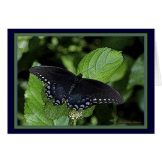 Eastern Tiger Swallowtail-Black female Card