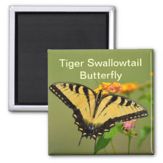 Eastern Tiger Swallowtail Butterfly 2 Inch Square Magnet