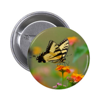 Eastern Tiger Swallowtail Butterfly Buttons