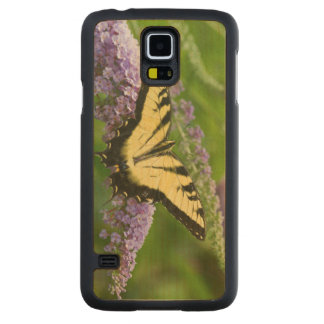 Eastern Tiger Swallowtail butterfly Carved Maple Galaxy S5 Slim Case