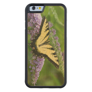 Eastern Tiger Swallowtail butterfly Carved Maple iPhone 6 Bumper Case